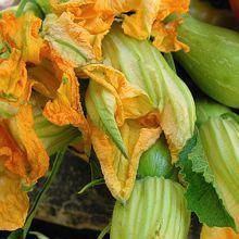 nice : beignets de fleurs de courgettes, recette de la cuisine