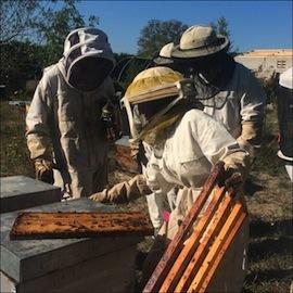 apiculteur mougins