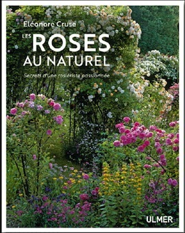 roses naturel cruse sq