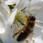 Var Fête du Miel 2016 aux Arcs-sur-Argens