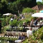 Var, Gondwana 2016, la Fête des Plantes méditerranéennes au Domaine du Rayol