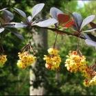 Fête des Jardins de Sophia Antipolis 2018 À chacun son potager