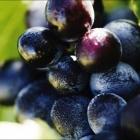Var Vins Côtes de Provence terroir Pierrefeu, des rosés pour l'été et des rouges de garde