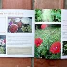 Recettes Faciles de Plantes Sauvages Sans Gluten Nice RendezVous rayon Livres
