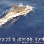 Nice Soirée sur les baleines de Méditerranée avec le CDMM au MAMAC