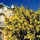 Dans le Carnet de Nice Rendez Vous 2021 Semaine 2 Covid, Boulot, Dodo
