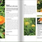 Soupe de Capucine et Yucca farci, le jardin gourmand de Noémie Vialard Nice RendezVous rayon Livres