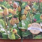 C'est Bon mais C'est Quoi ? 60 légumes étonnants pour son potager Nice RendezVous rayon Livres