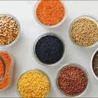 Vive les lentilles aux éditions Terre Vivante 40 recettes bio créatives et vitaminées (2)