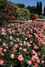 Les Parcs & Jardins de la Ville de Nice T_Nice_202